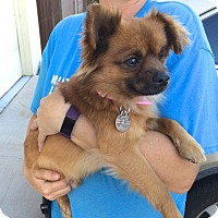Adopt A Pet :: Popeye - Scottsdale, AZ
