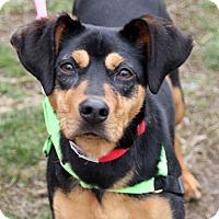 Adopt A Pet :: Paisley - Harrison, NY