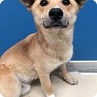 Adopt A Pet :: Dexter - Bryan, TX