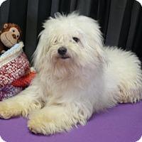 Adopt A Pet :: Falcor - REDDING, CA
