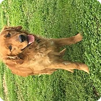 Adopt A Pet :: Andy - Chester, IL