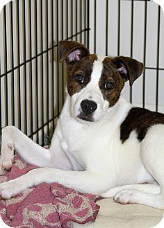 Border Collie Mix Dog for adoption in Muskegon, Michigan - Maya