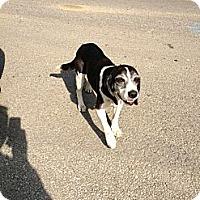 Adopt A Pet :: Shadow - Hazard, KY