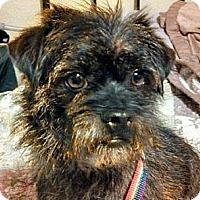 Adopt A Pet :: Kiki - URGENT - Seattle, WA