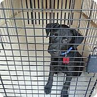 Adopt A Pet :: Terra - South Jersey, NJ