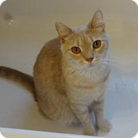 Adopt A Pet :: Baxter - Colmar, PA