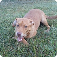 Hound (Unknown Type)/Terrier (Unknown Type, Medium) Mix Dog for adoption in Jefferson, Texas - Darlin