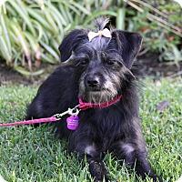 Adopt A Pet :: PATSY - Newport Beach, CA