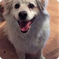 Adopt A Pet :: Pongo - Sacramento, CA