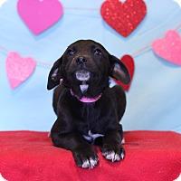 Adopt A Pet :: Xia - Waldorf, MD
