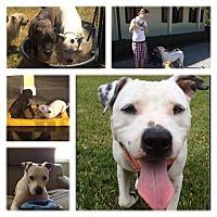 Adopt A Pet :: Jake - Southern Pines, NC
