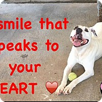 Terrier (Unknown Type, Medium) Mix Dog for adoption in Powellsville, North Carolina - BERT