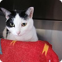 Adopt A Pet :: Lola - Chippewa Falls, WI