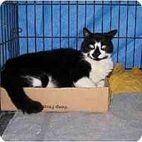 Adopt A Pet :: Eli - Westfield, MA