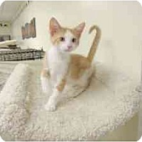 Adopt A Pet :: Crile - Milwaukee, WI