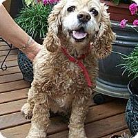 Adopt A Pet :: BUFFY - Tacoma, WA