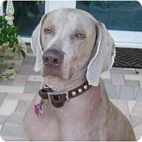 Adopt A Pet :: Toby  **ADOPTED** - Eustis, FL