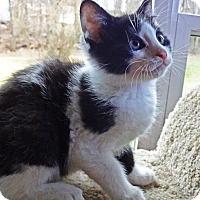 Adopt A Pet :: Rudolph - N. Billerica, MA