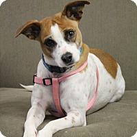 Adopt A Pet :: Elsa - Marietta, GA