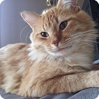 Adopt A Pet :: Bobo - Byron Center, MI