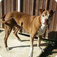 Adopt A Pet :: Sarge - Medora, IN