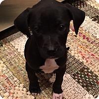 Adopt A Pet :: Parker P - Irmo, SC