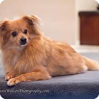 Adopt A Pet :: Merry - Toronto, ON