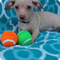 Adopt A Pet :: Clark - Charlotte, NC