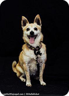 Chihuahua Mix Dog for adoption in Studio City, California - Annie