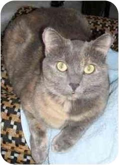 Domestic Shorthair Cat for adoption in Strathmore, Alberta - Sheba and Casper