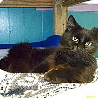 Adopt A Pet :: Shadow - Dover, OH