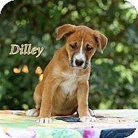 Adopt A Pet :: Dilley - Kingwood, TX
