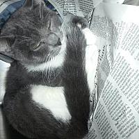 Adopt A Pet :: morris - Prestonsburg, KY