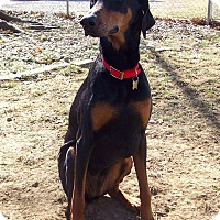 Adopt A Pet :: Sally--adopted!! - New Richmond, OH