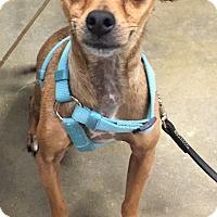 Adopt A Pet :: Charlie Brown - geneva, FL