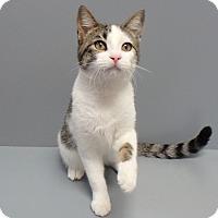 Adopt A Pet :: Tara - Seguin, TX