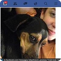 Adopt A Pet :: Carly - Sherman, CT