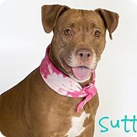 Adopt A Pet :: *SUTTON - Sacramento, CA