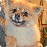Adopt A Pet :: Rita - Prole, IA