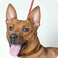 Adopt A Pet :: DAFFADIL - Ukiah, CA