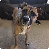 Adopt A Pet :: Molly - DeRidder, LA
