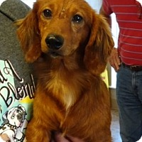 Adopt A Pet :: Armani - Humble, TX