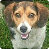 Adopt A Pet :: Tommy - Allentown, PA