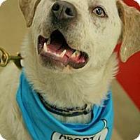Adopt A Pet :: Dabney - Tipp City, OH