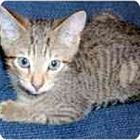 Adopt A Pet :: Murphy & Miley - Arlington, VA