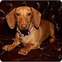 Adopt A Pet :: Greta 2225 - San Jose, CA