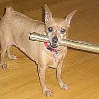 Adopt A Pet :: Brooke - Syracuse, NY
