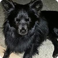 Adopt A Pet :: Liam - Gilbert, AZ
