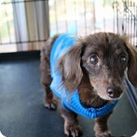 Adopt A Pet :: Victor - Marcellus, MI