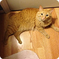 Adopt A Pet :: Hobbes - Simpsonville, SC